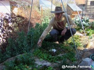 Brad Lancaster, a leader in drylands permaculture